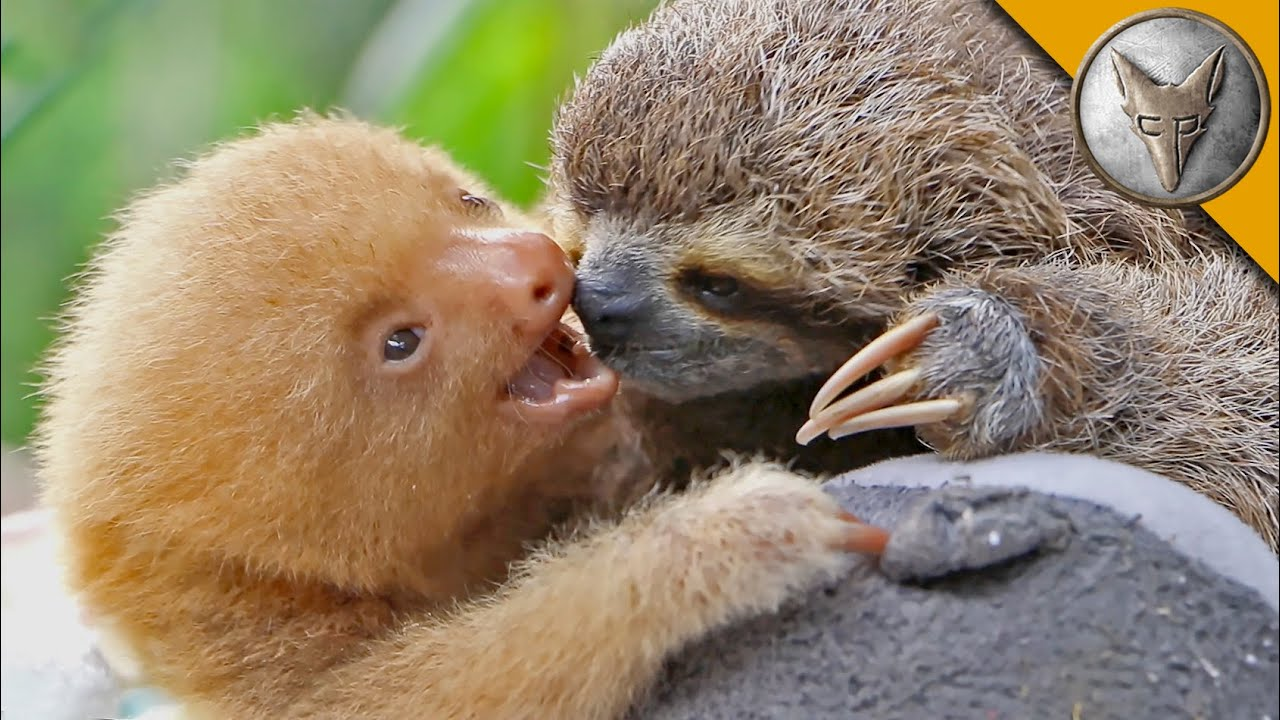 Sloth Pictures 3