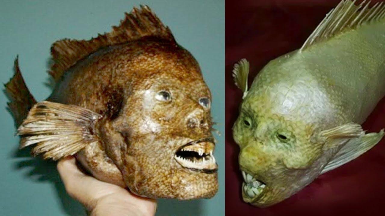 इंसानी चेहरे वाली मछली दिखी चीन में | अगर येकैमरे में रिकॉर्ड न होता तो कोई भी यकीन नहीं करता