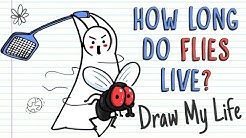 HOW LONG DO FLIES LIVE? | Draw My Life