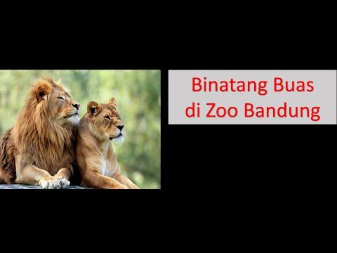 boom!!-ada-binatang-xyz-di-zoo-bandung