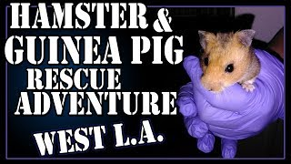 Hamster and Guinea Pig Rescue Adventure - West L.A.