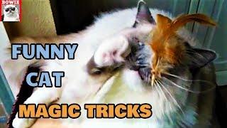 Funny Cat Magic Tricks