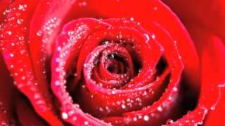 Aranjuez mon amour - R. Anthony par Dani cover