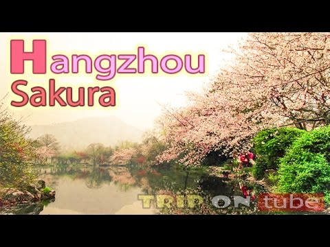 Trip on tube : Chasing Sakura (逐樱花) Episode 2 - Hangzhou [50fps]