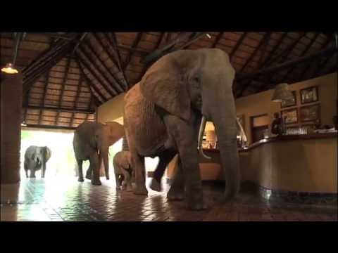 National Geographic Unique Lodges Of The World   Bushcamp Company's Mfuwe Lodge