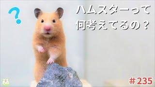 [ぬーさまLIFE!ch]チャンネル登録はコチラから♪ ▷https://bit.ly/2JhilY...