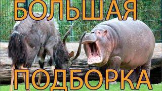 Драки животных. Новые приколы про животных 2014.