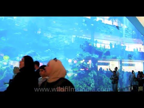 Dubai Aquarium and underwater zoo at Dubai Mall
