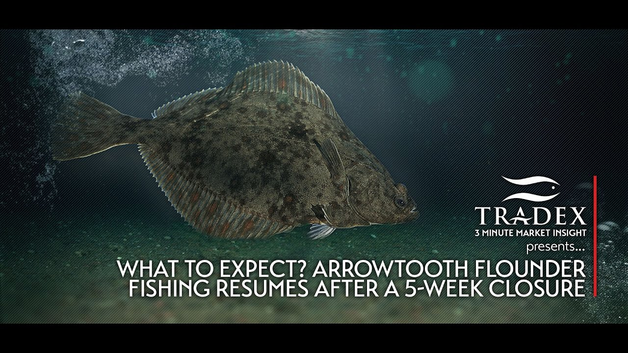 3MMI - What to Expect? Arrowtooth Flounder Fishing Resumes After a ...
