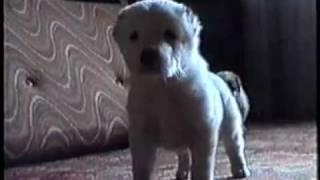 Дрессировка собак в Казани. Как выбрать щенка?