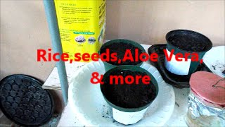 Rice,seeds,Aloe Vera, & more