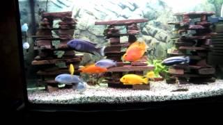 Интерактивный аквариумный туризм №29(Рубрика, куда вы присылаете свое видео и описание аквариума, а мы делаем из этого выпуск. Тема для Заявок:..., 2015-03-11T18:56:08.000Z)