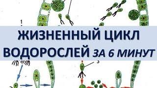 ЖИЗНЕННЫЙ ЦИКЛ ВОДОРОСЛЕЙ ЗА 6 МИНУТ (+ разбор заданий из ЕГЭ)