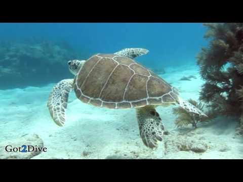 How To SCUBA Dive Florida - Molasses Reef Key Largo