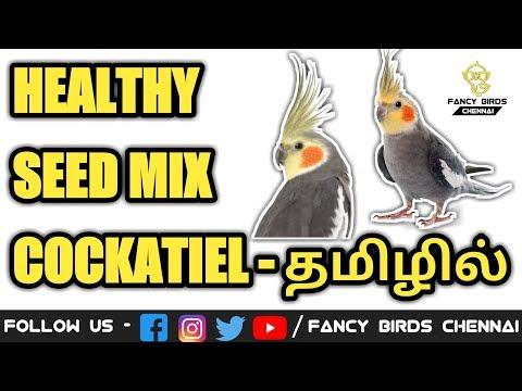 healthy-seeds-mix-|-cockatiel-birds-|-தமிழில்-|-fancy-birds-chennai