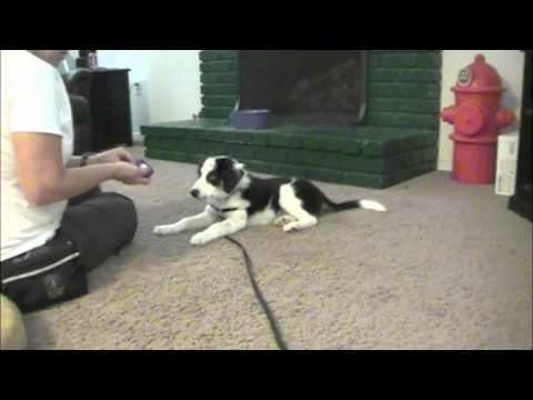 Paw & Foot Tricks - Puppy Clicker Training