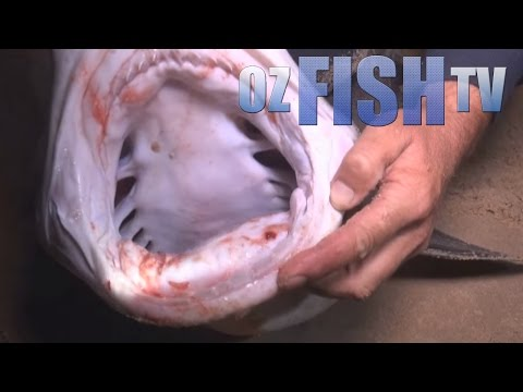 Oz Fish TV Season 3 Episode 2 - Landbased Sharks on the 90 Mile