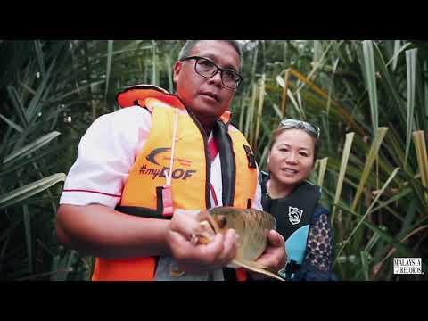 Arowana Record Of Malaysia