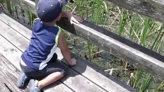 虫捕り 品川区みなとが丘埠頭公園