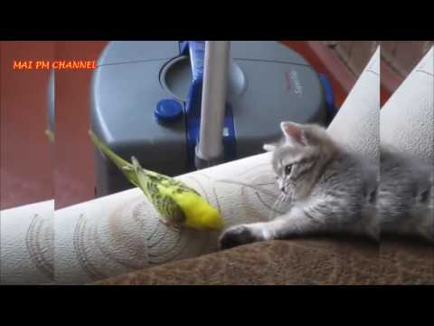 Funny birds annoying Cats