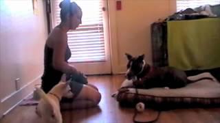 Yogi Pups & Purrs Dog Training _ Impulse Control Exercises For Dogs
