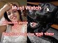 Dhinchak Pooja Selfie Maine Leli Aaj || Funny Dog Reaction on Dhinchak pooja Muat Watch