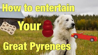 5 ways to keep your Great Pyrenees entertained
