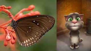 Kupu-kupu yang lucu 🦋- Lagu Anak Indonesia Populer   Tom Lucu