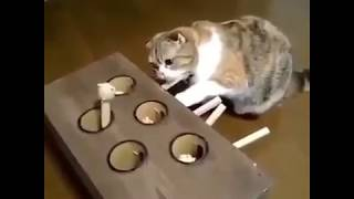 Funny Cats Compilation [MUST SEE] Funny Cat Videos 2018