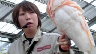 神戸どうぶつ王国 ウォーターリリーズにて 数種類の鳥( ダルマワシ、ベ...