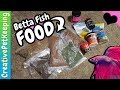 Betta Fish Food for Adults and Fry | Pellets, Flakes, Frozen, Freeze Dried, Live Cultures