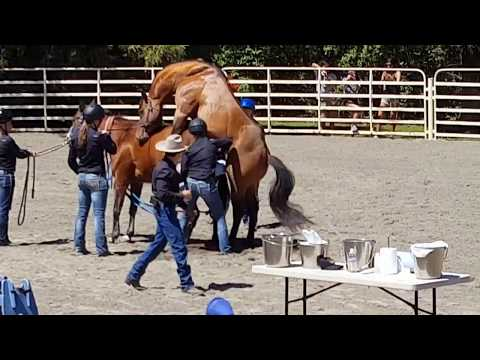 2016 UC Davis Picnic Day-Stallion Ejaculate Collection Demo
