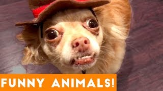Funniest Pets of the Week Compilation December 2017 | Funny Pet Videos