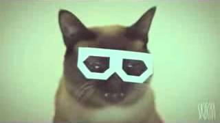 Stereo skifcha | Dubstep cat | 4 HOURS VERSION |