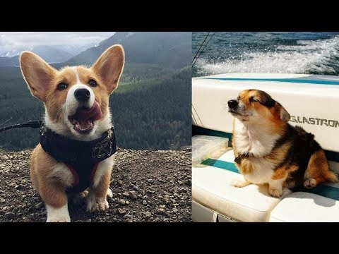 Funny Dogs - A Cute And Funniest Puppy Videos Compilation #6