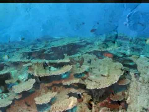 Republic of Palau - The Rock Islands & Underwater Life