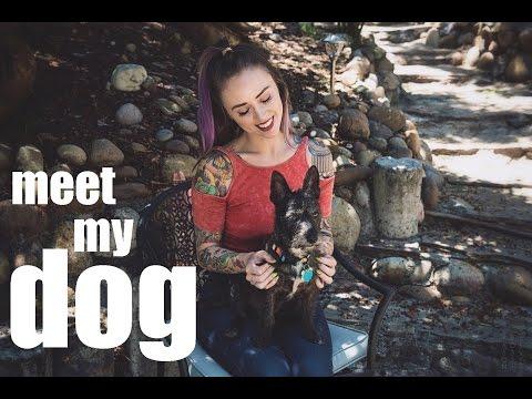 Meet My Dog - with Alysha Nett & Franklin