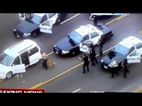 ТОП Служебные Собаки в действии