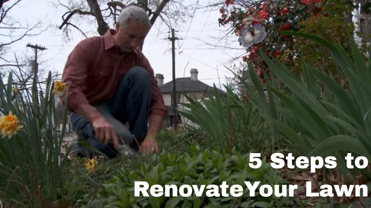 Attirant How To Renovate Your Lawn In Five Steps