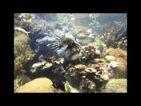 The Omaha Aquarium