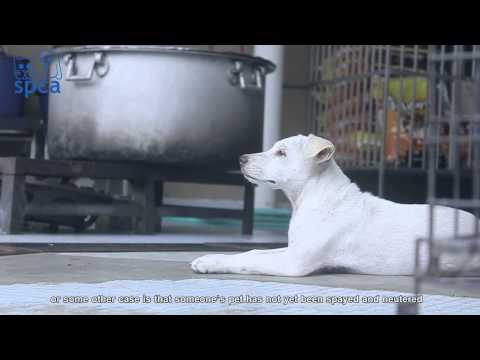SPCA Corporate Video ( Adopt, Don't Buy )