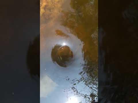 Swirling Whirlpool, whirls, whirlpools, swirls, eddies, mini-whirlpool, tornado, suli in water