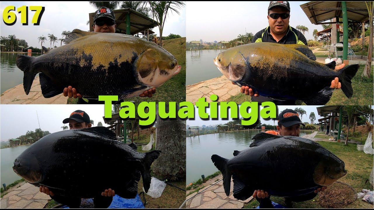 Muita chuva e grandes Tambaquis e Tambacus fisgados no Taguatinga - Fishingtur 617 Pesca