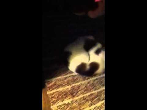 kitty spiral