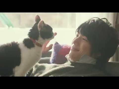 福士蒼汰 旅猫リポート CM スチル画像。CMを再生できます。