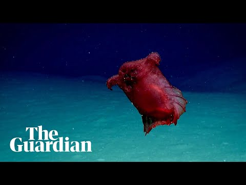 Bill Cunningham - Australian Scientists Discover Headless Chicken Monster In Southern Ocean