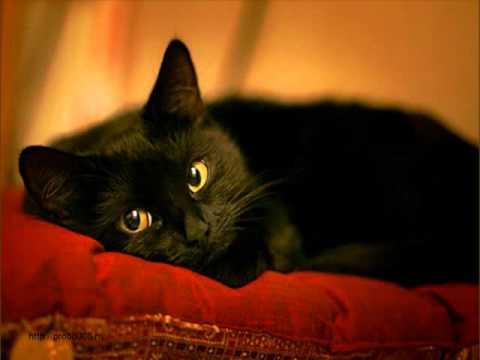 Жил да был черный кот