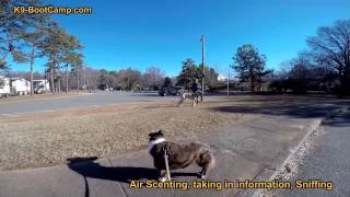 Behavior Modification Lesson With Leash Aggressive Dog