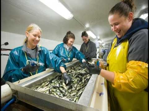 Salmon Farming In BC