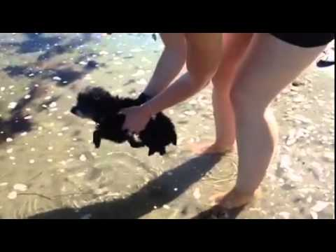Little dog trying to swim in the Ocean